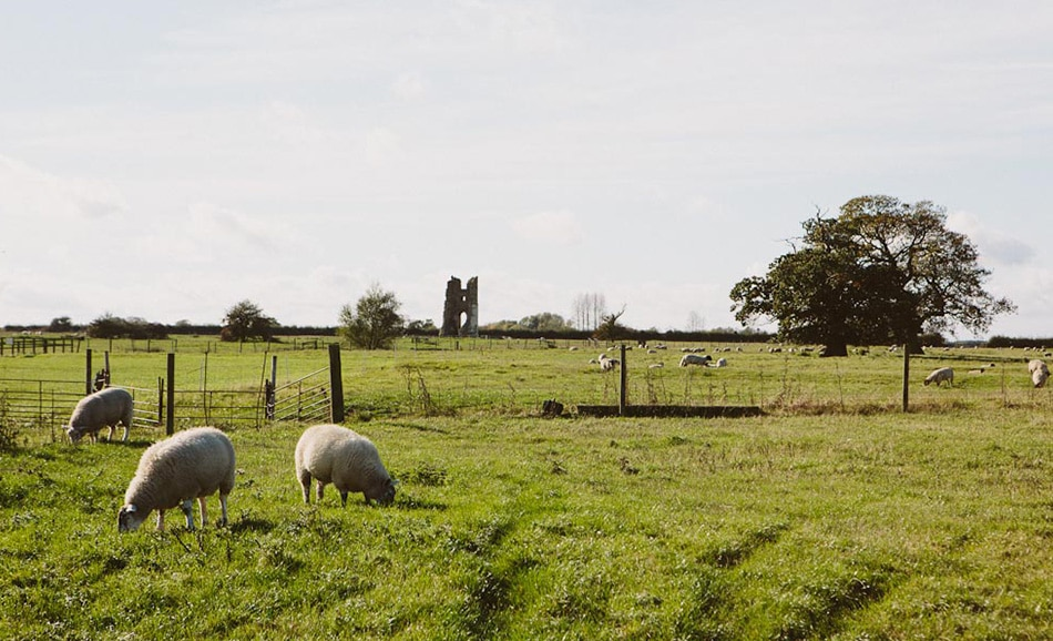 Peach and Jo - Godwick isn't Godwick without sheep in the ancient landscape